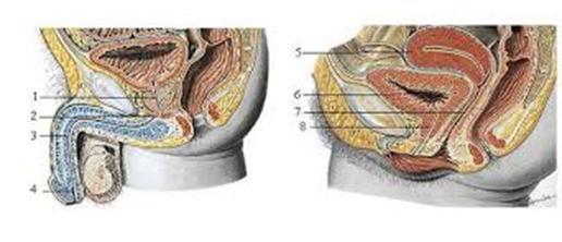 Bài tập phục hồi chức năng cơ đáy chậu (Bài tập Kegel)